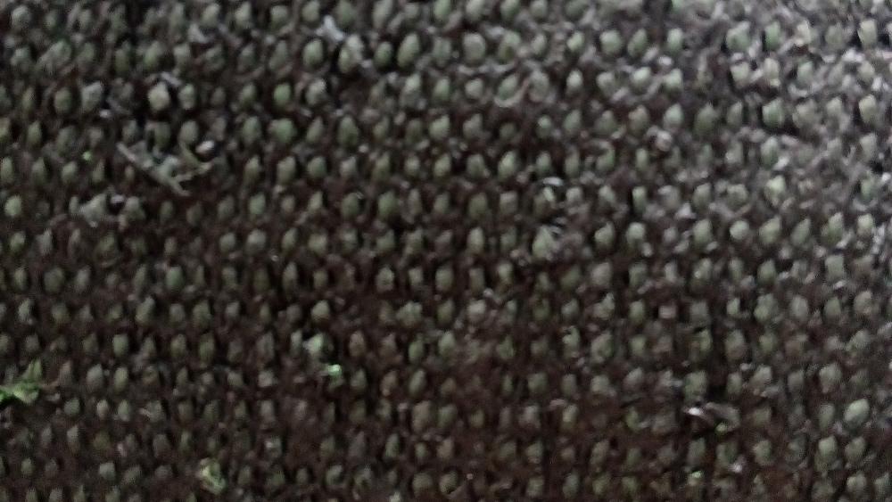 Искусственная трава Oryzon Squash (Высота ворса 6 мм) изображение 10